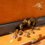 May 2012 – The Beekeepers Calendar