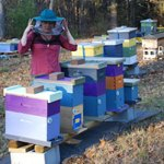 Erin MacGregor-Forbes, Master Beekeeper and Past President of the Maine Beekeepers Association