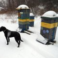 Winter in Maine - photo by Overland Apiaries