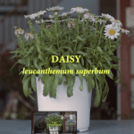 Video for People who have Questions about Plants and Neonicotinoids