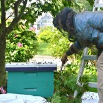 Erin MacGregor Forbes Saving a Swarm In East Boothbay
