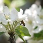 Beekeeper's Calendar: May