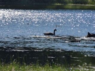 Rangeley River 3