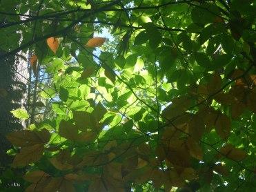randall orchard1
