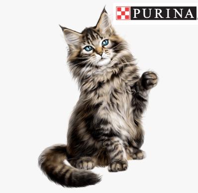 https://www.purina.com/articles/cat/health/cat-healthy-skin-and-coat