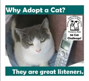 cat as listener