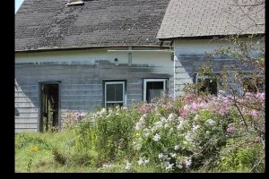 Fabulous phlox and a view of the Mattawamkeag river across the road. Fixer-upper?