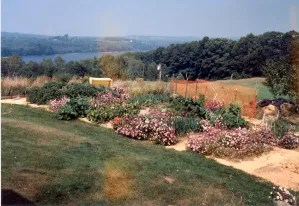 Mom's well-composted garden in full bloom.