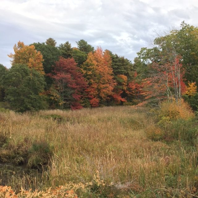 Marshland adjacent to the Mousam River in Kennebunk
