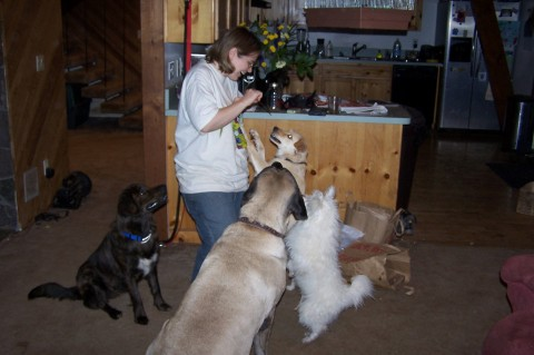 Training time, with Donna, Snowball, Spoon, and Rainne.