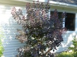 Another tree/bush-type plant that's grown up in front of the workshop.