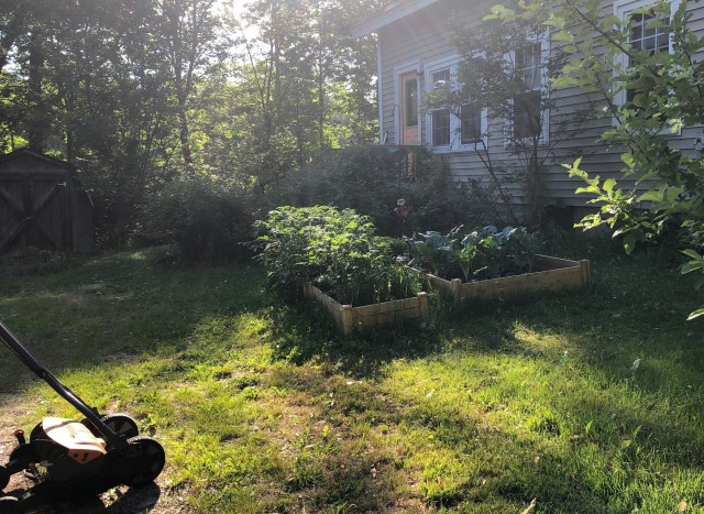 sun shining through trees on a lawn, plants and lawnmore