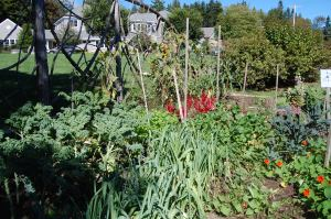 One of Mount Desert Elementary's three raised gardens, which produce vegetables such as kale, beets, tomatoes and leeks for school lunches.