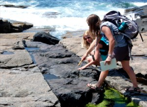 Teachers Kathy Dixon-Wallace and Katie Danielson are looking at a diabase dike on rocks at Schoodic Point
