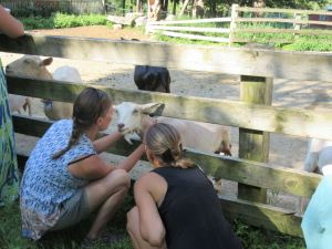 Teachers enjoy the dairy goats at York Hill Farm in New Sharon