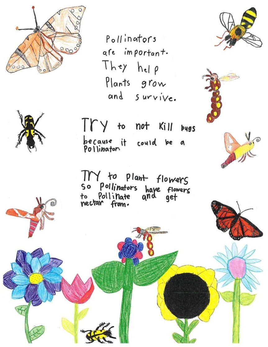 Pollinators are important. They help plants grown and survive. Try not to kill bees because it could be a pollinator. Try to plan flowers do pollinators have flowers to pollinate and get nectar from.