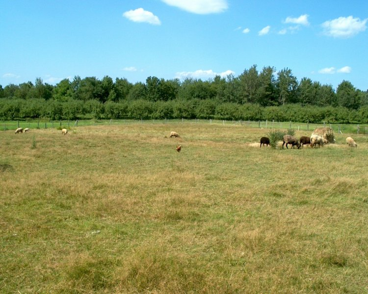 Farm ID 1600