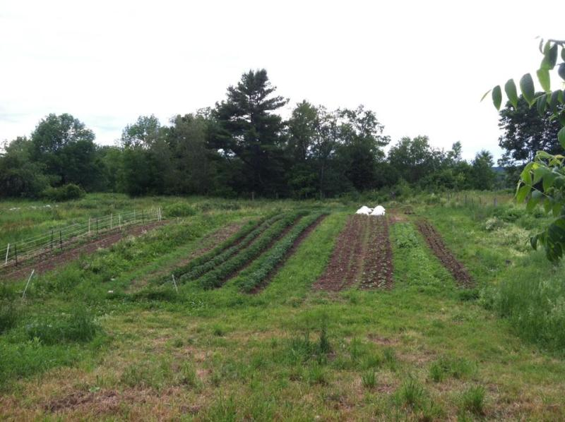 Farm ID 3486