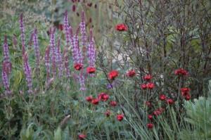 Perennial-Meadow-Spring-05