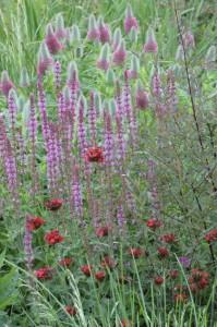 Perennial-Meadow-Spring-15
