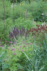 Perennial-Meadow-Spring-19