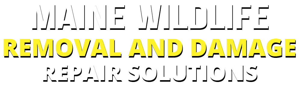 Maine wildlife removal and damage repair solution