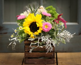 sunflower, facts, pretty, trivia, main floral, flowers, delivery, near, by, area, coon rapids, champlin, maple grove, anoka, best, minnesota, twin cities, flower shop, ramsey, minneapolis, saint paul, florist