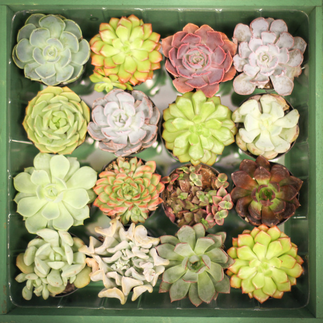 Succulents are In! { Care tips from Main Floral in Anoka }