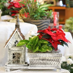 christmas, flowers, floral, best, poinsettia, gift, ideas, shop, local, small, town, business, main floral, minnesota, anoka, coon rapids, ramsey, champlin, maple grove, blaine, brooklyn, park, center, delivery, minnesota, twin cities, saint paul, minneapolis, beautiful, holiday, decor, decorations