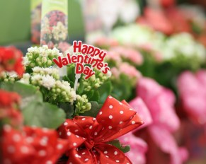 Creative, Ways, Give, Gift, Flowers, Valentine's Day, Arrangements, Floral, Twin Cities, Minneapolis, Anoka, Main Floral, Ideas, Gifts, Coon Rapids, Blaine, Champlin, Maple Grove, Area, Near, By, Best, Flower Shop, How-To, Favorite, Delivery, Twin Cities, Minnesota, MN