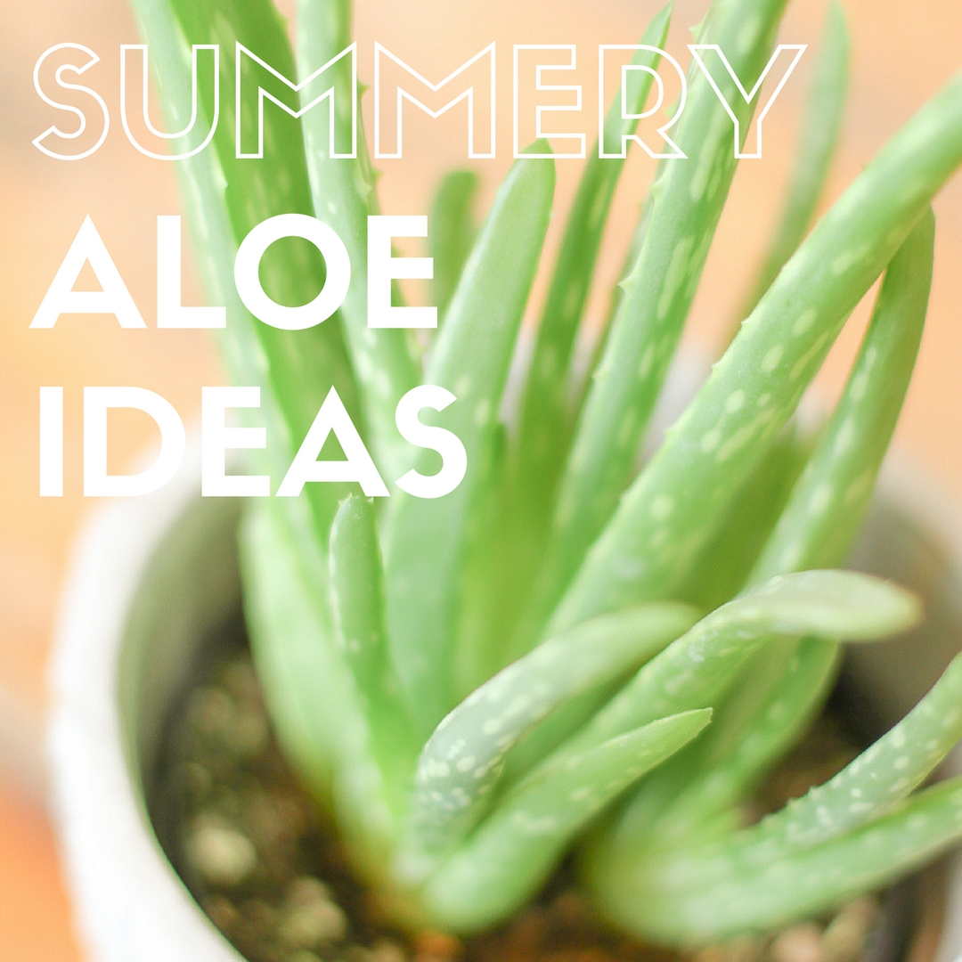 Aloe Vera Plant Uses { Florist in Twin Cities }