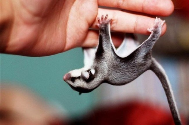Самые сладкие животные на свете (19 фото)
