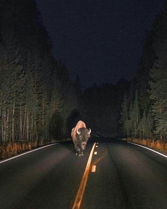 Очень неожиданные встречи с животными (16 фото)