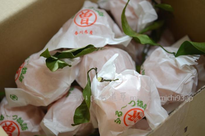 香川の袋がけみかん「ふる~つ物語」