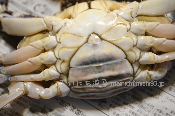 渡り蟹メスのハラ