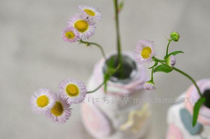 春の花「ハルジオン」