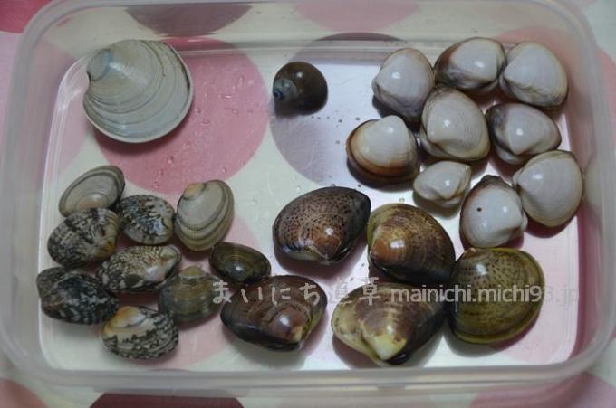 五種類の貝が採れました