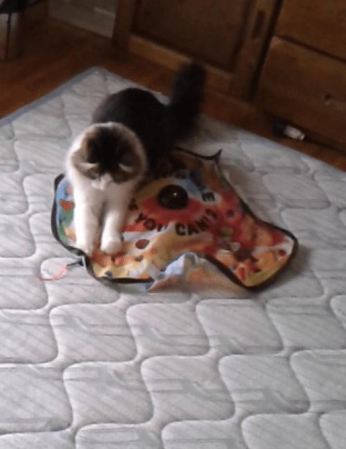 キャッチミーイフユ―キャンで遊ぶ猫