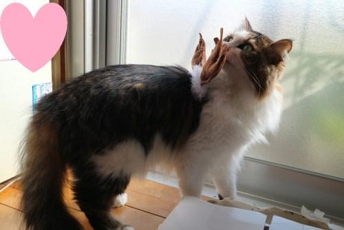 トナカイのコスプレをする猫