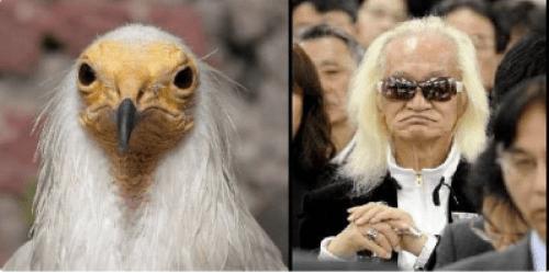 内田裕也と怪鳥