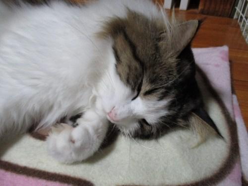 ストーブの前で寝る猫