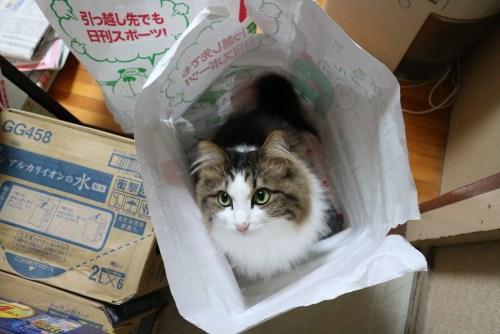 ごみの袋に入る猫