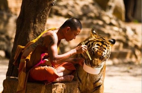 ご飯を分けてもらう虎