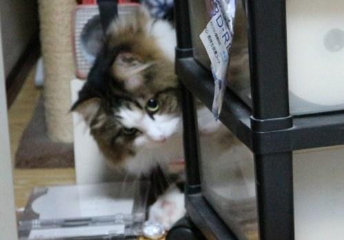 パソコンの下に潜る猫