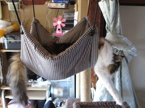 ハンモックに入る猫