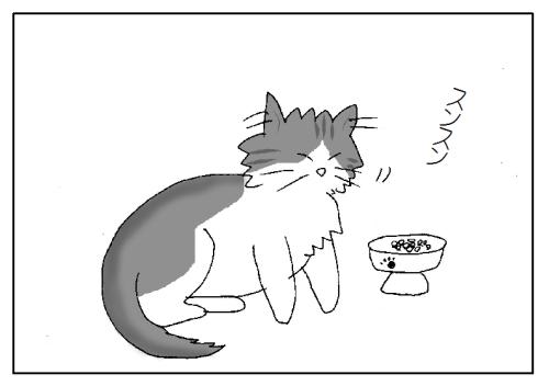 食べ物に興味がない猫