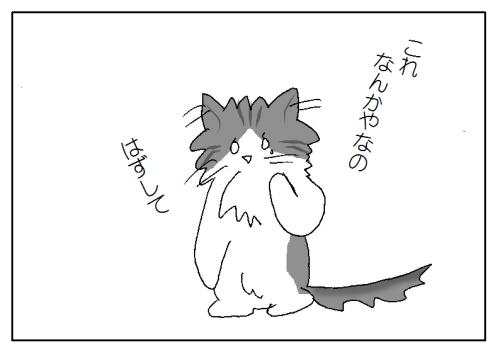 首輪を嫌がる猫