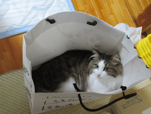 紙袋に入る猫