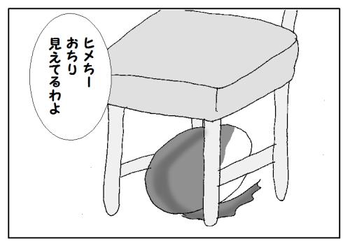 猫の肉球のいろ