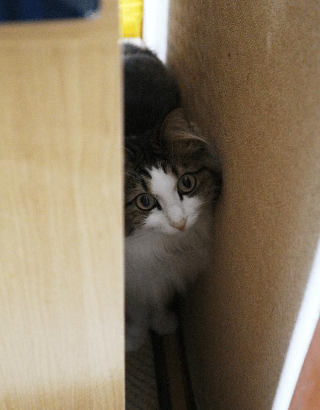 狭い所に潜る猫